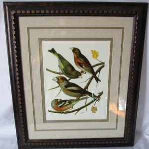 Beautiful Framed Colorful Bookplate Birds W. Rutledge Beautiful vivid colors Framed and Matted Green and Beige
